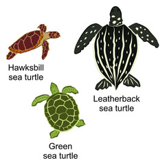 Vector illustration of three kinds of turtles. Brown hawksbill sea turtle, black leatherback sea turtle and