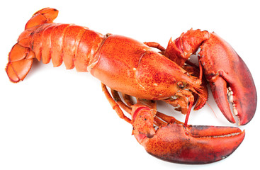 Foto op Plexiglas Schaaldieren Red lobster isolated on white background
