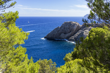 Seascape from the pines forest