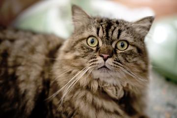 Closeup Cat