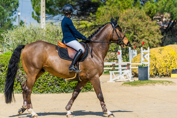Equitation,saut d'obstacles,compétition.