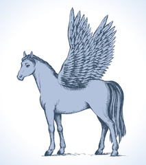 Pegasus. Vector drawing