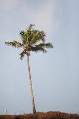 Beautiful lonely palm tree on the top of the cliff
