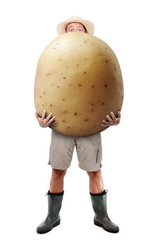 Funny gardener carrying a large potato. A farmer hold big potato isolated on white background. Successful vegetable grower. Large harvest of genetically modified foods.