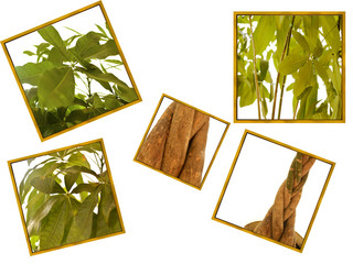 collage of a flowering tree in pieces on a white background