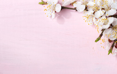 Light pink wooden background with flowering apricot branches.
