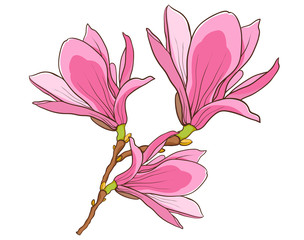 blossom branch of pink magnolia.
