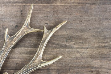 deer antlers on a wooden background with copy space