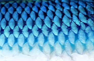 Photo background fragment of fish scales