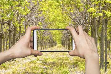 Tourist using  smartphone taking a photo of tree tunnel walkway