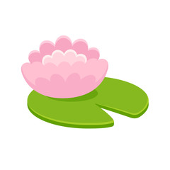 Pink water lily illustration