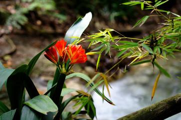 HDR Colorful Orange Rain Forest Flower