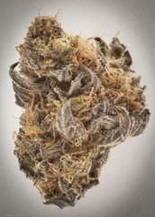 USA - Cannabis - Strains - Purple Mr. Nice - Portland, Ore
