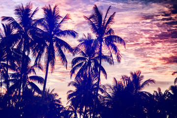 Silhouettes of palms on the background of the setting sun, nature background for tourist advertising