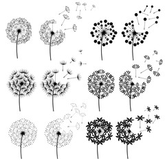 Abstract Dandelions for spring season