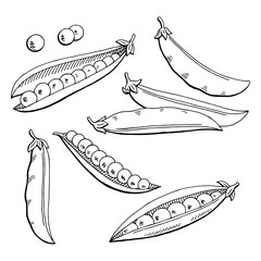 Pea graphic black white isolated sketch illustration vector