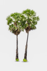 sugar palm duo di-cut Isolated white background