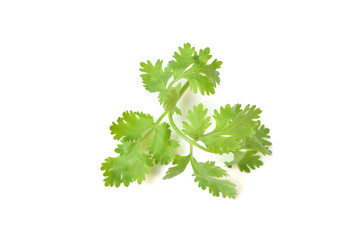 Coriander leaves on white background - isolated