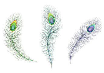 Beautiful multicolored sparkling peacock feathers. Green, blue and purple carnival peacock feather. Illustration of white background