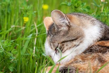 Gatto nel giardino