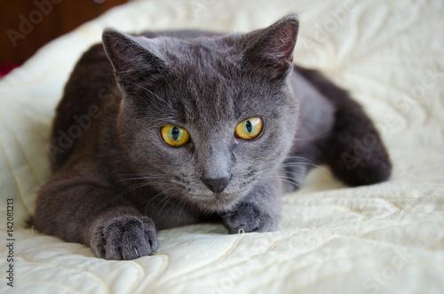 cat heart failure