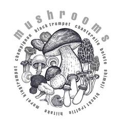 Mushrooms in a circle.