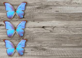 Fotobehang Vlinders in Grunge blue butterfly on wood background