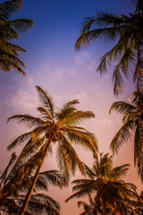 Sunset against the backdrop of palm trees.