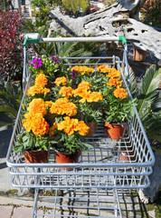 Compra de flores. Selección de flores para plantar en el jardín.