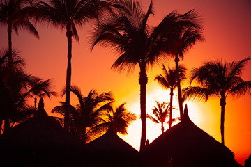 Tropical sunset with silhouetted palapa grass hut and palm trees