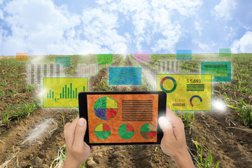 Wall Mural - Internet of things(agriculture concept),smart farming,industrial agriculture.Farmer hold a tablet and use augmented reality technology to analysis all data in the field