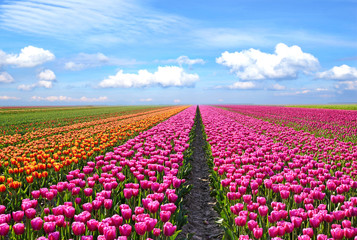 Fantastic landscape with colorful flowers tulips against the sky (relaxation, meditation, stress reduction, background - concept)