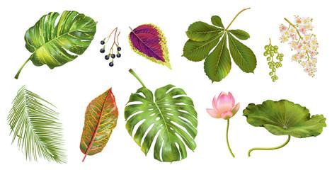 Tropial plants set