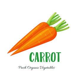 Vector carrot vegetable