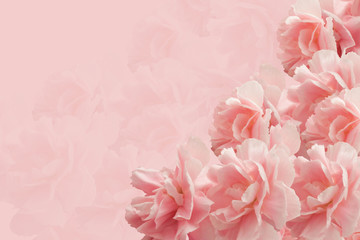 Greeting Card. Bouquet of Carnations on a pink background.  Mother's day.