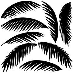 black palm leaves