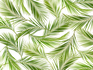 Green palm branches background