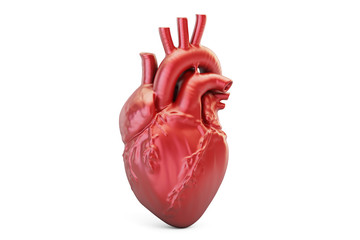 Human heart, 3D rendering