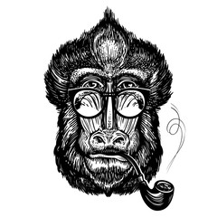 Hand-drawn portrait of funny monkey with glasses. Smart mandrill and smoking pipe. Sketch vector illustration