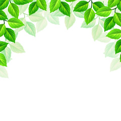 Vector background with green leaves.