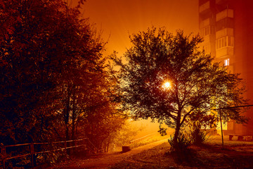 Tree Night Lantern Hell City for print