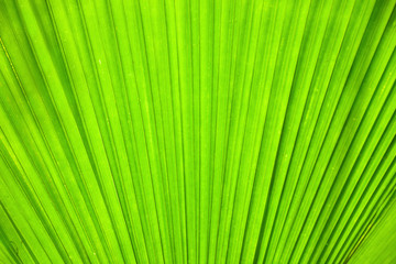 Plant leaf
