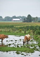 Soggy Pasture