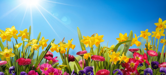 Search photos category plants and flowers flowers daffodils and spring flower mightylinksfo