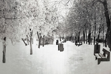 Winter scene in the park after the snow storm.