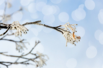 Frozen twig in snow and ice over sky defocused background