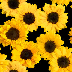 Seamless pattern with photos of shiny yellow sunflowers on black