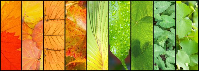 assemblage de feuilles
