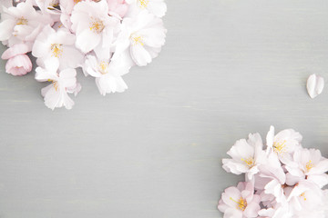 Light pink cherry blossoms on grey wood