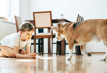Boy and beagle dog play with ball at home